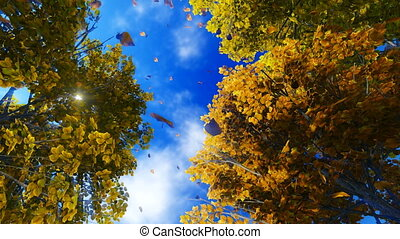 Autumn leaves 1 - Realistic three dimensional animation...