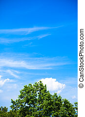 Blue sky, white clouds n green tree