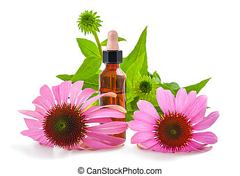 Coneflower extract with dropper and flowers isolated on...