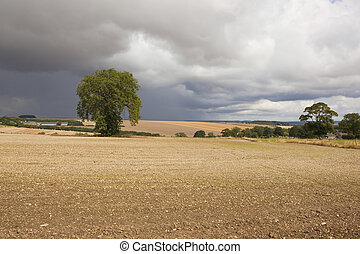 chalky agricultural landscape - a lone tree with hedgerows...