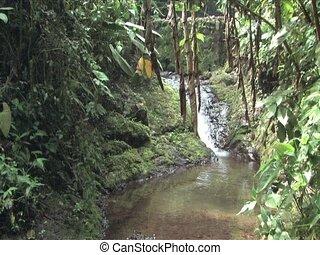 Stream in the Cloudforest in Peru
