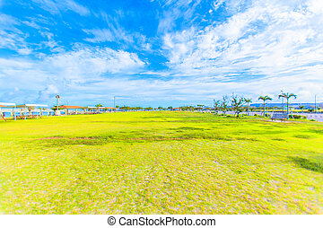 Green grass and blue sky with cloud