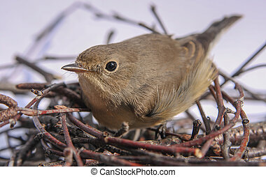 bird - The bird sitting in the nest