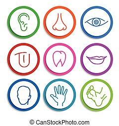 set of vector icons Human body parts - set of colored icons...