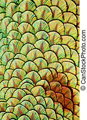 Peacock feather patern - animal patterns