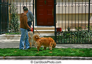 Dog walkers - Young male dog walkers chatting in Chicago,...