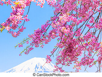 Mt Fuji unde the cherry blossom - Mount Fuji under Weeping...