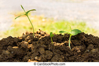 Green sprout growing from seed in organic soil