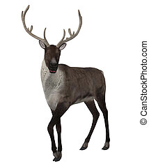 3d Reindeer - Digitally rendered illustration of a reindeer...