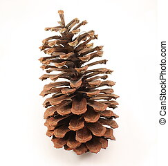 Pine Cone - A pine cone isolated on a white background.