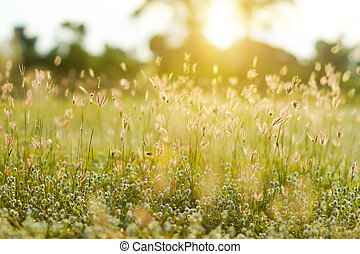 Grass and sunset light