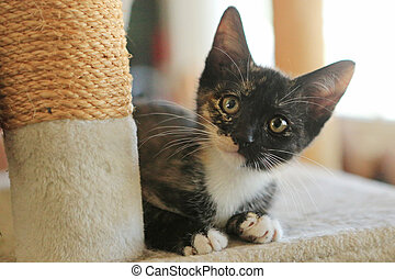 Baby Cat Sitting on Play Tower in Natural Light - Kitten...
