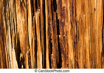 Decaying tree - Close up of wood grain of decaying tree