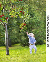 Cute funny baby girl running under a red berry tree in a...