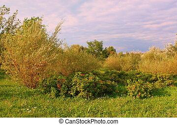 Wild vegetation before sunset.
