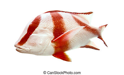 Red emperor (government bream) Lutjanus sebae - Red emperor...