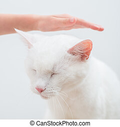 Child hand stroking head of white cat