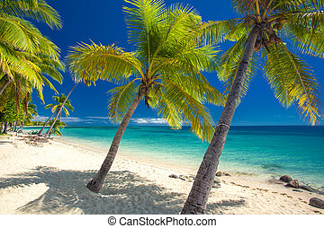 Deserted beach with coconut palm trees on Fiji
