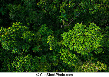 Rain forest from air near Kuranda, Queensland, Australia -...