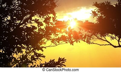 sunset in tropical sea with tree and clouds - Sunrise in...