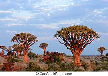 Quiver tree landscape - Desert landscape with granite rocks...