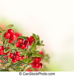 Cranbery on white background - Cran berry isolated on white...