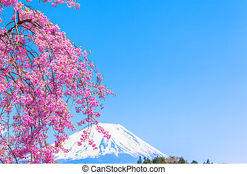 Mt uji under Weeping cherry blossom - Mount Fuji under...