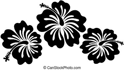 black hibiscus - isolated hibiscus flowers in vector format...