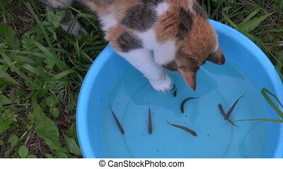 active cat catch fish - Hungry playful cat catch fishes from...