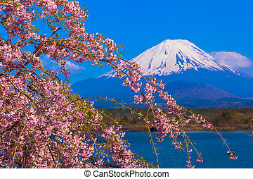 Mt Fuji n Weeping cherry blossom - Mount Fuji and Weeping...