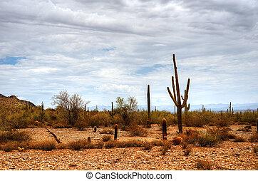 Sonora Desert - Sonora desert in central Arizona USA