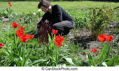 tired gardener flowers - Tired gardener woman weeding flower...