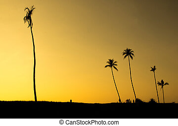 People in silhouette gathering under coconut trees
