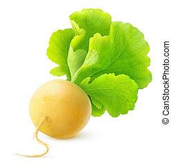 Turnip - Yellow turnip isolated over white