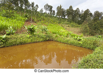 Kenyan Fish Pond - An artificial fish pond in a valley in...