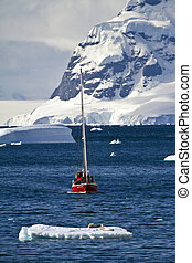 Antarctica Wildlife Expedition - Exploring Antarctica -...