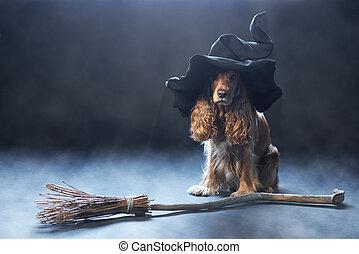perro, Sentado, Brujas, sombrero