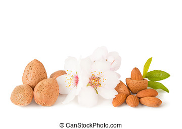 almond - dried almonds isolated on a white background