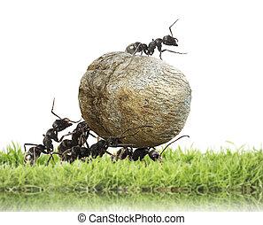 Ameisen stock fotos illustrationen und lizenzfreie ameisen bilder seite 2 - Ameisen in der wand ...