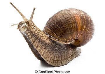 Snail - Funny snail on a white background