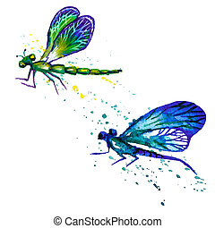 Watercolor dragonflies isolated on the white - Vector...