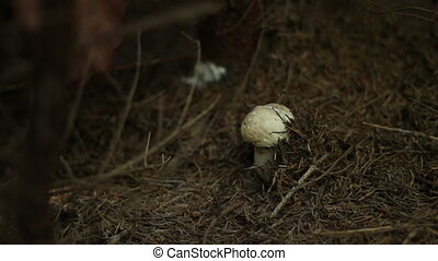 Picking Mushroom in Woods
