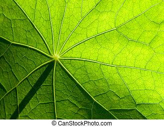 leaf - green leaf