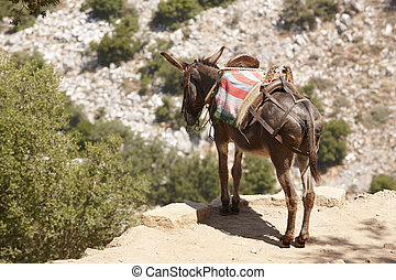 Traditional greek donkey. Rural mode of transportation....