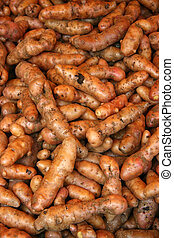 Raw fingerling potatoes - Harvested organic fingerling...