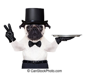 cool dog peace - cool pug with gloves and black hat holding...