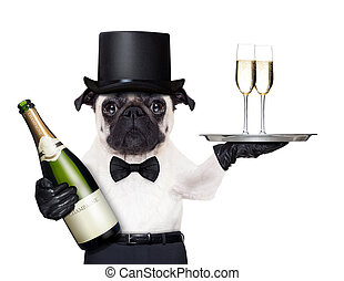 cool dog peace - pug with champagne glasses on a service...