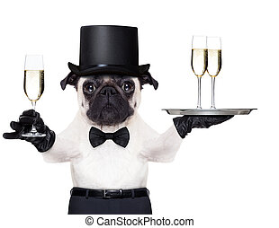 Felice, nuovo, anno, cane