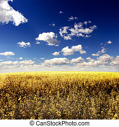 Summer Landscape - Beautiful Summer Landscape with Yellow...