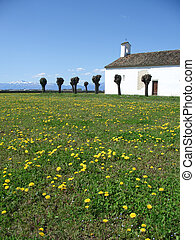 Spring country church - Blossoming dandelions field near a...